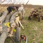 Tineri prinşi în flagrant la Vințu de Jos în timp ce tăiau, fără drept, arbori