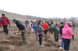 """În cadrul campaniei naţionale """"Luna plantării arborilor"""", Cugirul – pregătit să facă împăduriri cu zeci de mii de puieţi pe mai bine de 100 de hectare de terenuri"""