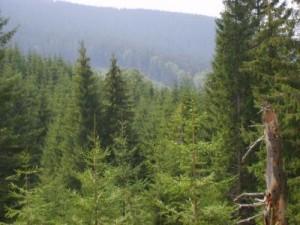 ocol-silvic-cugir-obiective-2013