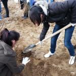 Sute de mii de puieţi pregătiţi pentru plantare în pădurile din Cugir