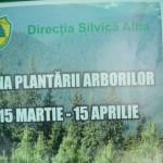"""Pe raza Ocolului Silvic Cugir au fost plantați puieți pe 35 hectare pădure în cadrul """"Lunii plantării arborilor"""""""