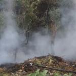 """În apropierea cimitirului """"Trei Ierarhi"""" din Cugir a izbucnit astăzi un incendiu de vegetație uscată"""