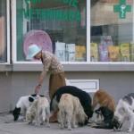 Presoanele din Cugir prinse că hrănesc maidanezii sau plimbă animalele de companie în locurile de joacă pentru copii vor fi amendate