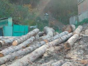 busteni lemn