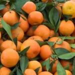 Un sfert din fructele și legumele de pe tarabe conțin urme de pesticide
