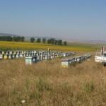 Terenuri gratuite pentru apicultori oferite de către administraţia locală din Cugir