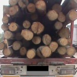 Bărbat de 60 de ani din Geoagiu surprins de polițiști în timp ce transporta o remorcă de lemne de foc fără acte de proveniență