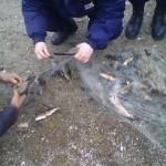 Un bărbat din Sibiu și alți patru din Pianu şi Vinţu de Jos s-au ales cu dosare penale pentru braconaj piscicol pe albia râului Mureş
