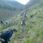 """Elevii școlii gimnaziale """"Ioan Mihu"""" din Vinerea au plantat puieți de molid și paltin"""
