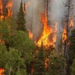 Aproximativ 6 hectare de pădure au fost ditruse de un incendiu petrecut în Munții Retezat