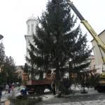 """Astăzi a fost ridicat tradiționalul brad de Crăciun pe platoul din fața Bisericii """"Adormirea Maicii Domnului'' din Cugir"""