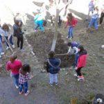 """Elevii Şcolii Gimnaziale """"David Prodan"""" din Săliştea au plantat arbuşti şi răsaduri de flori, în cadrul campaniei """"Şcoala Ecoterrienilor"""""""