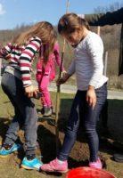 """""""Luna plantării arborilor"""" marcată de elevii de la Școala Gimnazială Ceru Băcăinţi prin plantarea a 10 goruni în curtea școlii"""