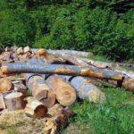 12,7 metri cubi de material lemnos confiscați de polițiștii din Cugir, în urma unui control la o societate comercială din oraș