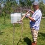 Comuna Pianu, invadată de șerpi și șopârle. Primarul este în cautarea unei firme specializate care să-i îndepărteze