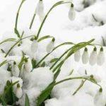 Mesaje de 1 martie, Mărțisor. Felicitări şi urări pe care le puteţi trimite cu ocazia venirii primăverii | cugirinfo.ro