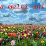 Mesaje de Florii. SMS-uri, urări și felicitări care pot fi transmise persoanelor care îşi sărbătoresc onomastica | cugirinfo.ro