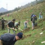 """Cu ocazia """"Lunii pădurii"""", sute de mii de puieți de molid, larice și paltin de munte au fost plantați în pădurile din jurul orașului Cugir"""