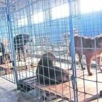 Primăria Cugir a amenajat un adăpost temporar pentru câinii fără stăpân